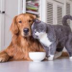 miski dla psow i kotow